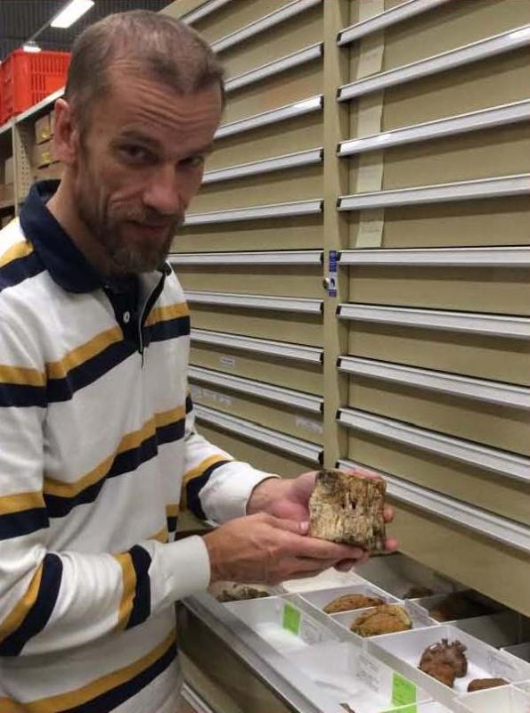 Dr Mikael Sivverson holds a fossil plesiosaur vertebra