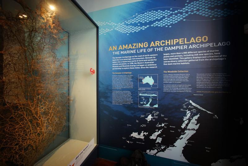 Gorgonian fan display in the Dampier Marine Gallery