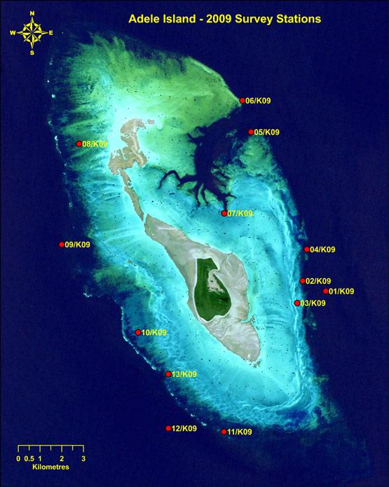 Station Diaries Marine Life Of The Kimberley Region