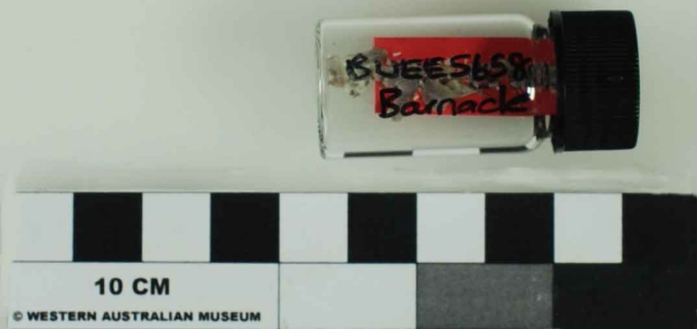 Marine artefact recovered from Bunbury Excavation East