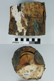 Animal artefact recovered from Vergulde Draak (Draeck) (Gilt Dragon)