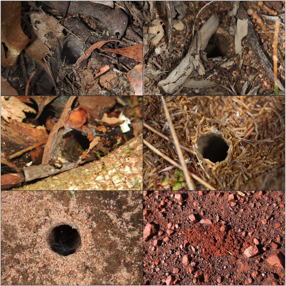 Spider burrows