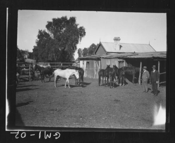 Men and horses outside stables,'O'Keefe', turkeys.