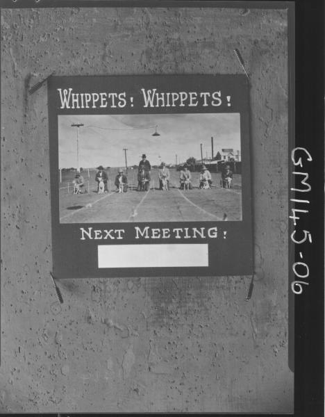Advert picture of whippet racing