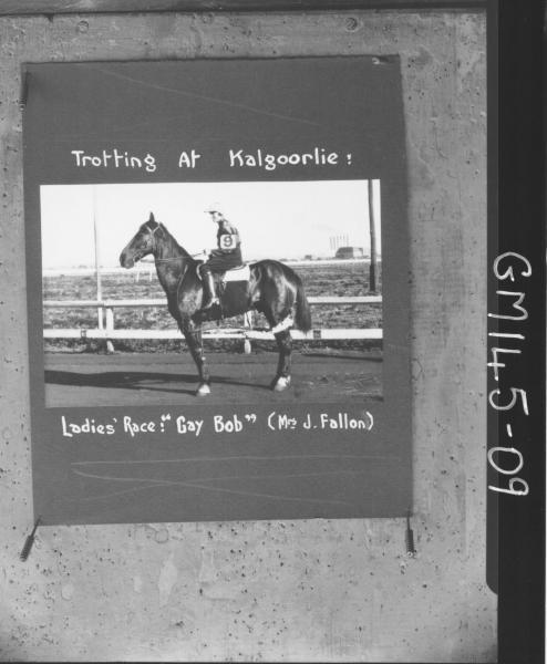 Trotting at Kalgoorlie, Ladies race Gay Bob 'Fallon'