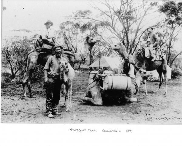 3 prospectors, 2 riding camels, one work camel with water tanks on load, one calf. Tents in bush in background.