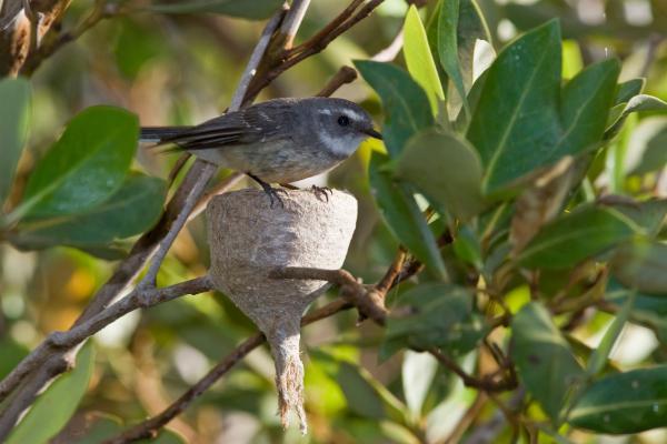 Live image of bird