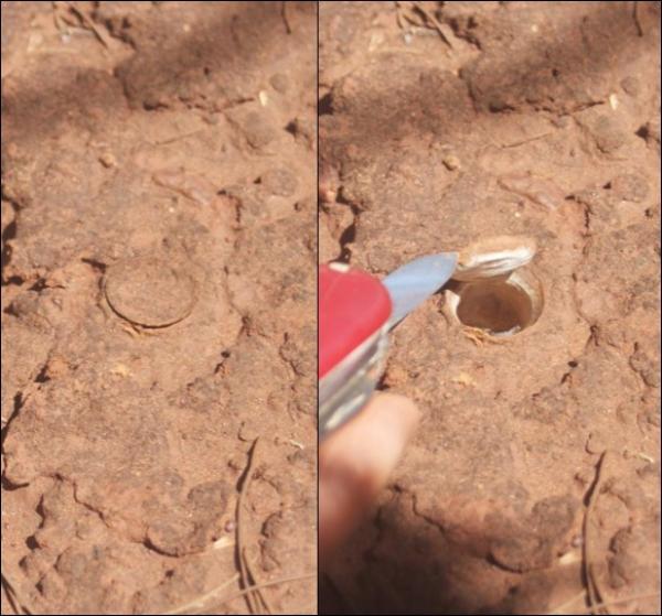image of spider burrow