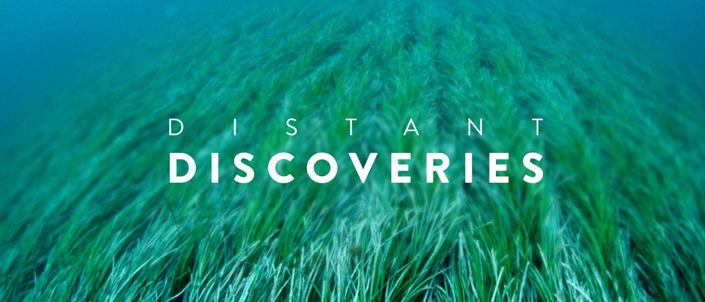 Distant Discoveries