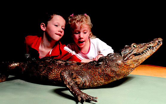 Kids with a crocodile in the Discovery Centre