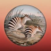 Field Guide to Western Australian Fauna