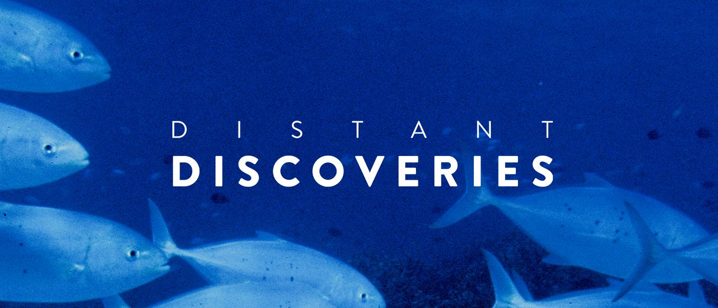 Distant Discoveries - Maritime Museum - underwater with fish