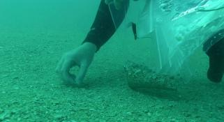 Gathering shells from the sea floor