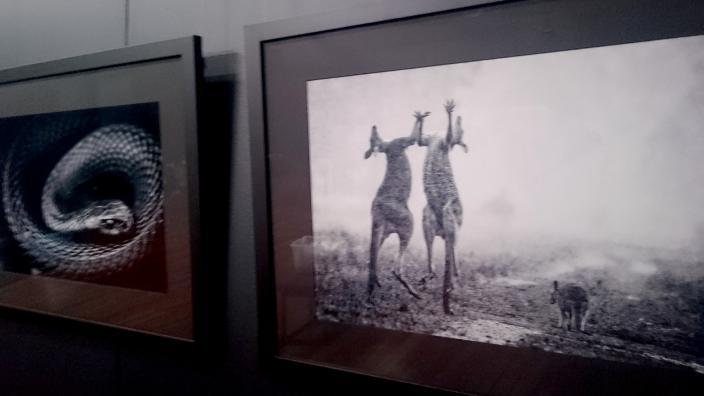 ANZANG exhibition