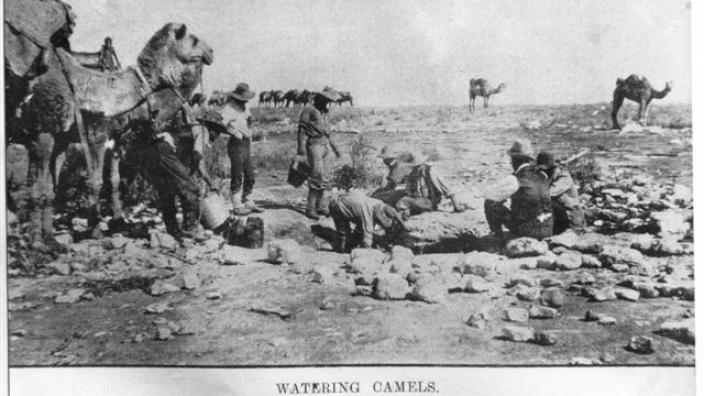 Monochrome photograph of watering camels at gnamma hole, 1890s-1900s