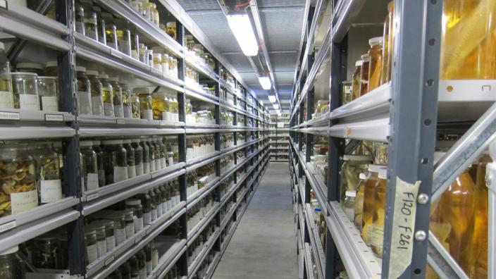 Wet Store Shelving at the Collection and Research Centre