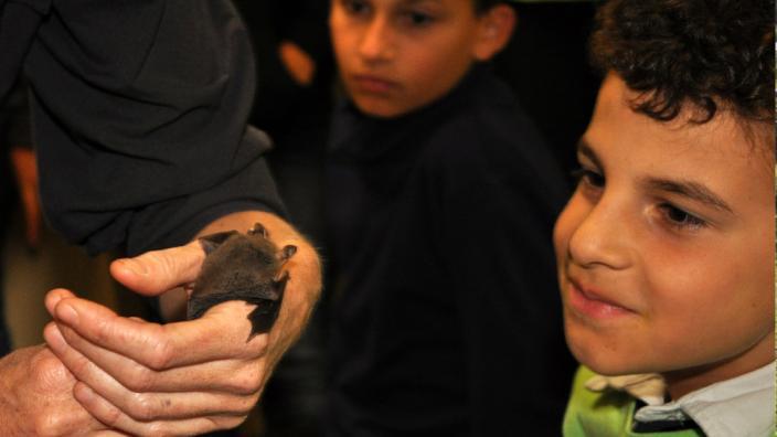 Child looking at a bat
