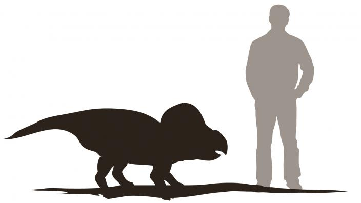 Protoceratops stands 1m tall