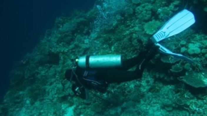 Dr. Nerida Wilson diving underwater