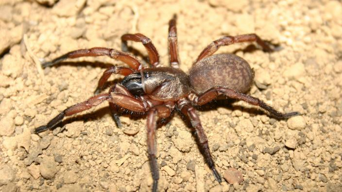 A large spider crawling over the dirt