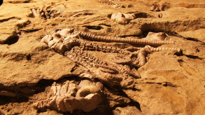 A formation contained many exposed fossils
