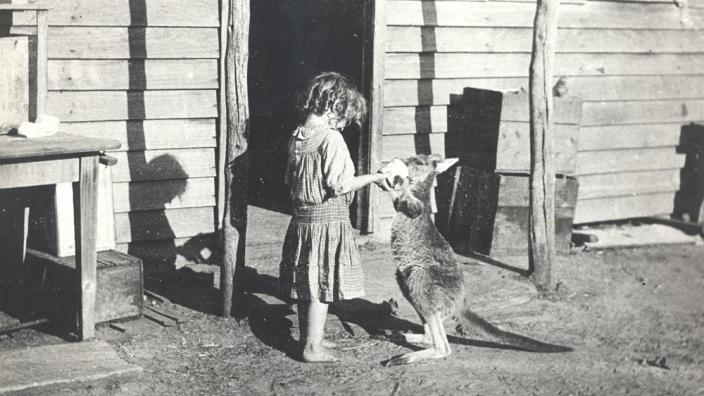 A small girl feeding a kangaroo