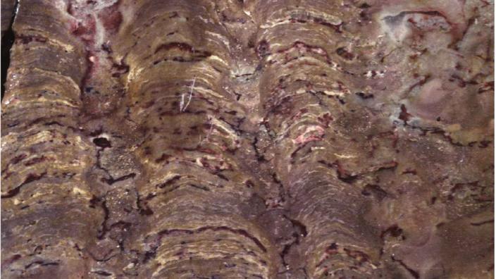 A large stromatolite formation