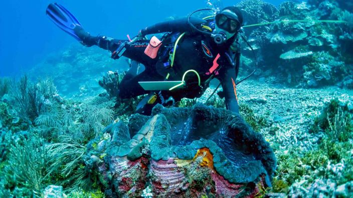A giant clam with a diver swimming nearby