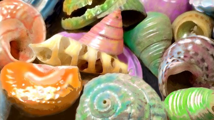 Shell life in the Pacific Ocean.