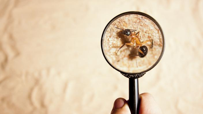 Magnify glass looking at ant