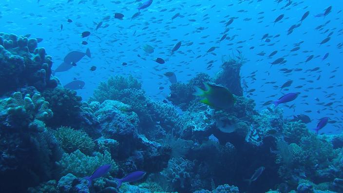 Stunning coral reef habitat during fauna surveys at Scott Reef, Northwestern Aus