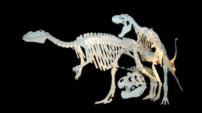 Two dinosaur skeletons and a t-rex skull