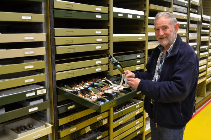 Ron Johnstone examining birds in the WA Museum collection.