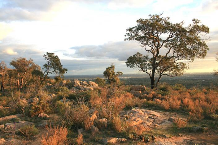 Landscape of the Darling Ranges, a rocky hill top with a great tree reaching up