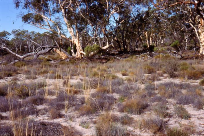 Dry dusty ground with patches of grass and trees on the horizon
