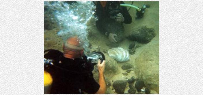 A diver photographer a partially covered clam shell