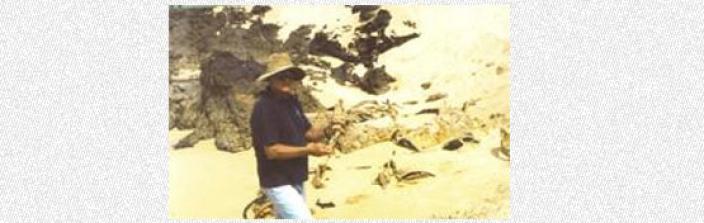 Beach with a scientist examining detritus
