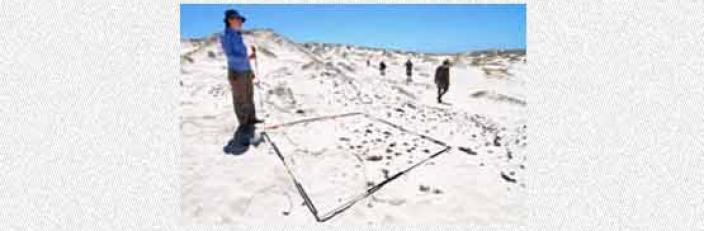 Scientists marking an area for investigation