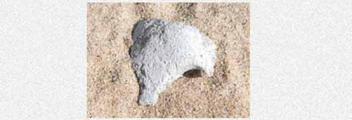 A small bone fragment partially consealed in sand
