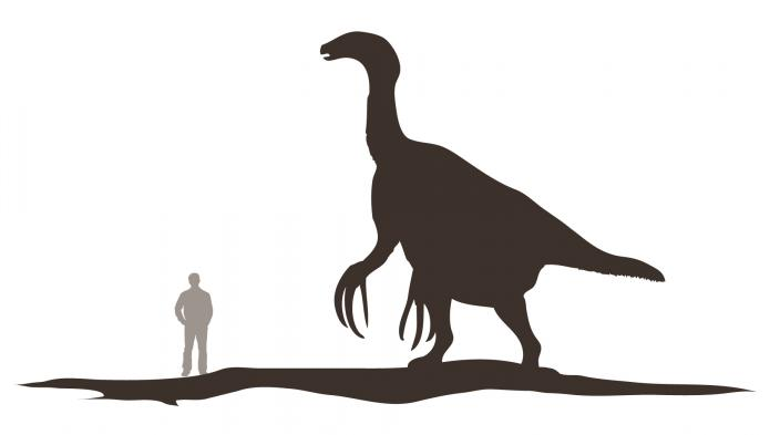 Therizinosaurus cheloniformis is 4 times taller than a human
