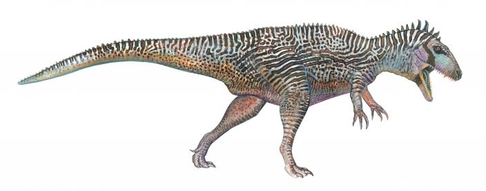 Carcharodontosaurus #