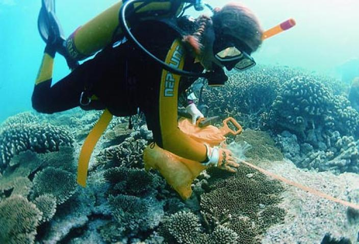 Image of a diver laying out a transect across a reef.