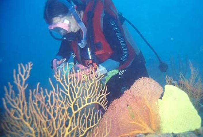 Image of a researcher collecting specimens in a deep reef habitat.