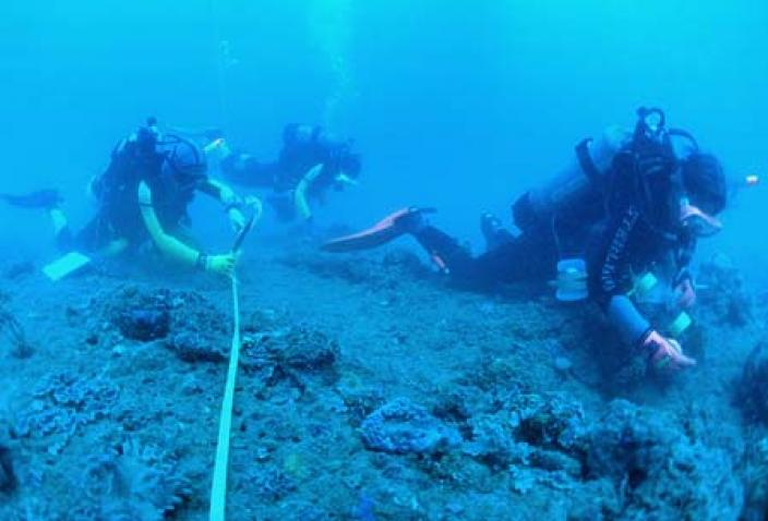 Image of researchers collecting specimens along transect in a deep reef habitat