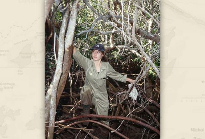 Image of researcher moving through the mangroves.