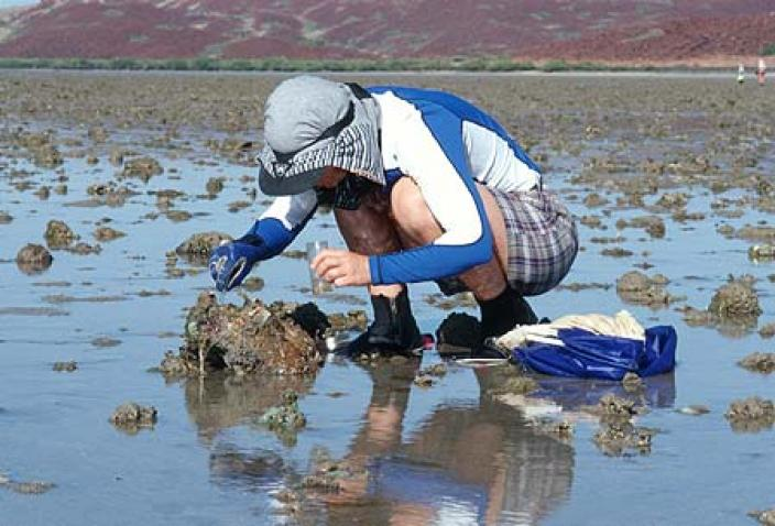 Image of a researcher collecting specimens along a rock shore.