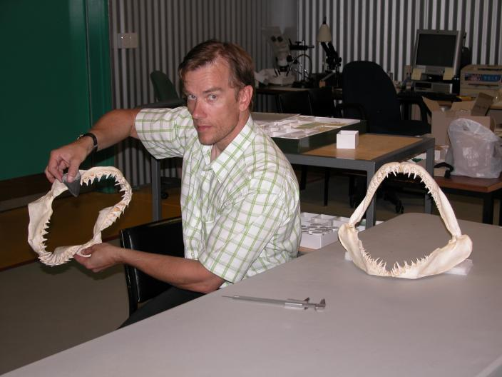 Image of Dr Siversson comparing shark tooth specimens