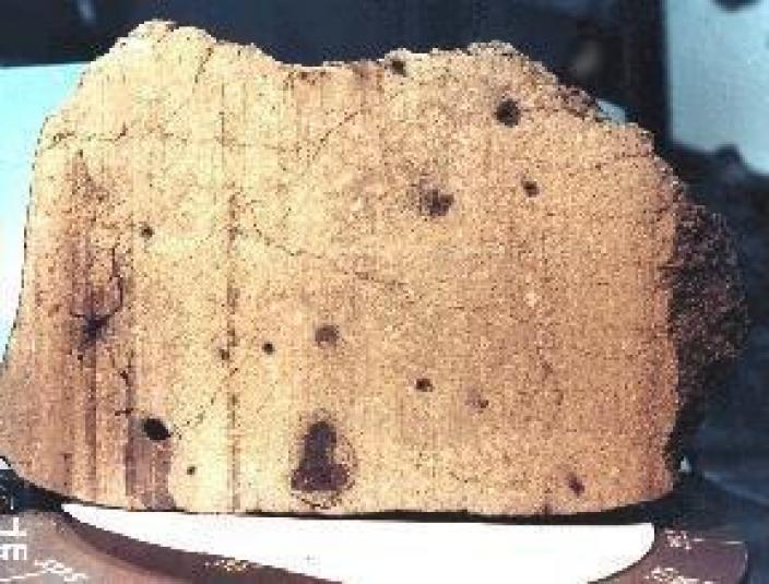 Cross section of a meteorite with holes where gas may have been trapped.