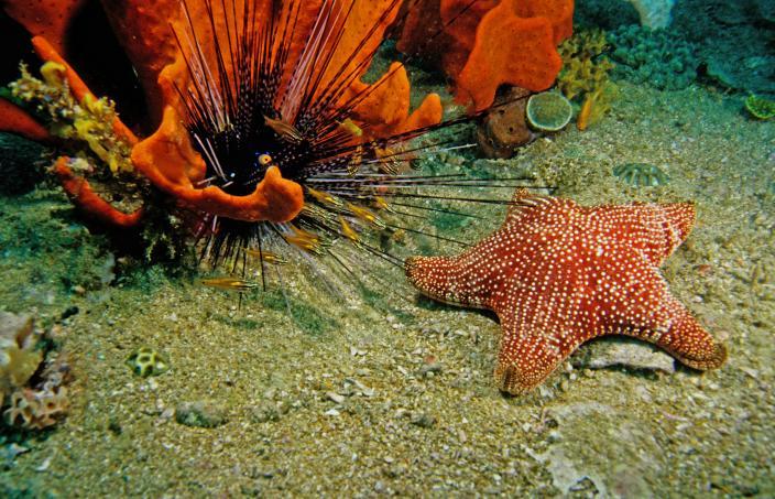 Image of an underwater scene in Dampier Archipelago