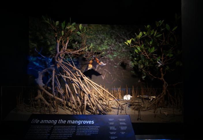 Marine Life of the Dampier Archipelago